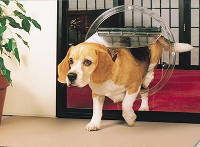 Pet Doors By Jims Glass