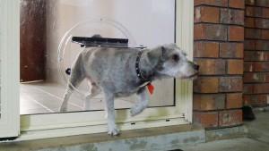 dog-doors4 Dog Doors
